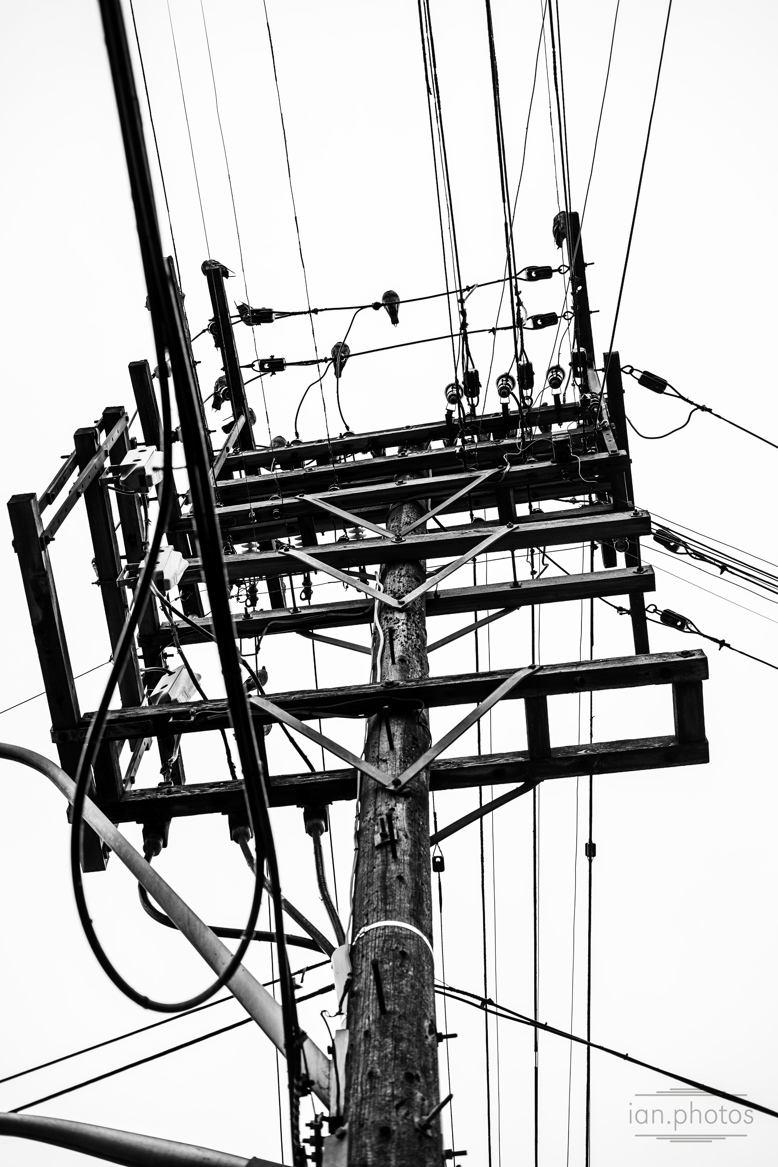 Black and White Photo Powerlines and pole with pigeons perched on. | ian.photos