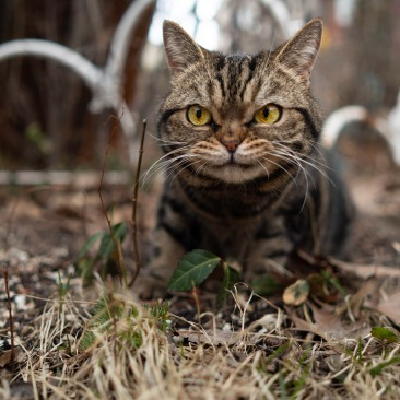 Cat among fallen leafs and former greenery. | ian.photos