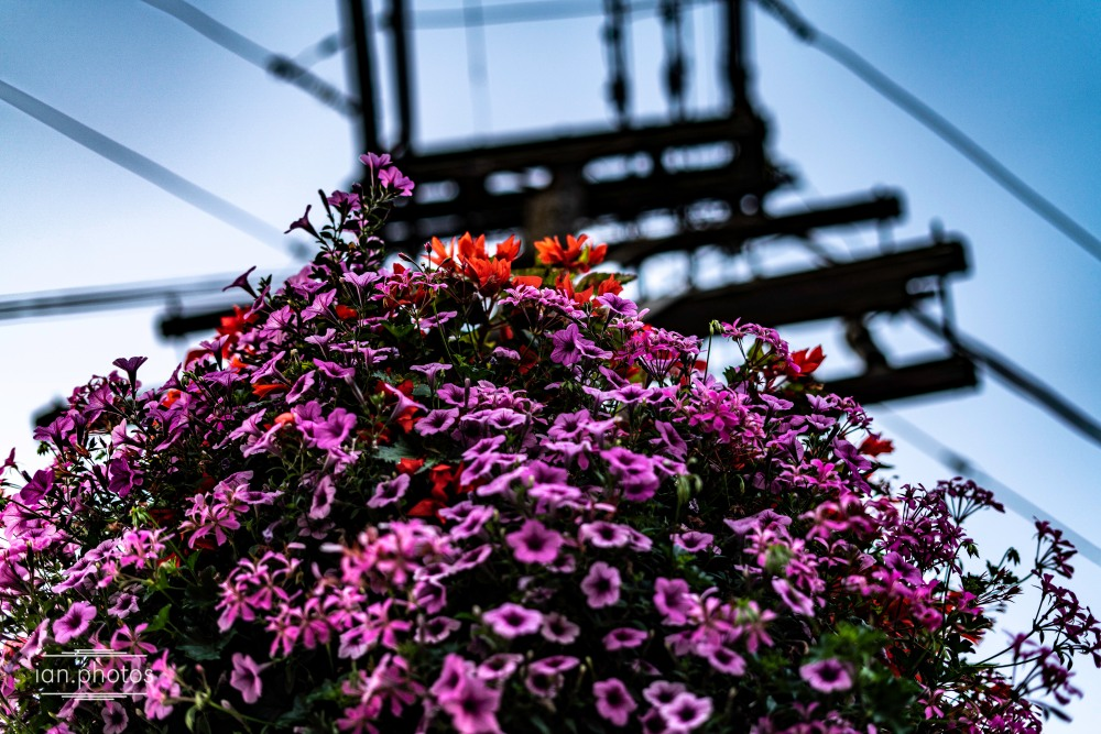Bouquet of flowers with an electrical pole in the background.