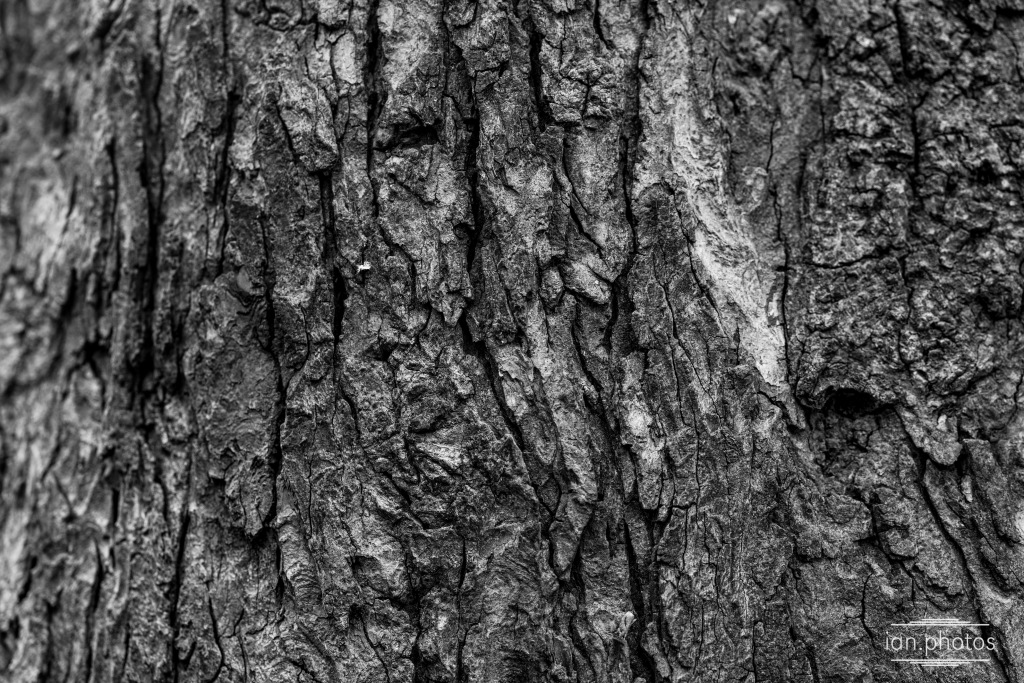 close up of treebark in black and white.